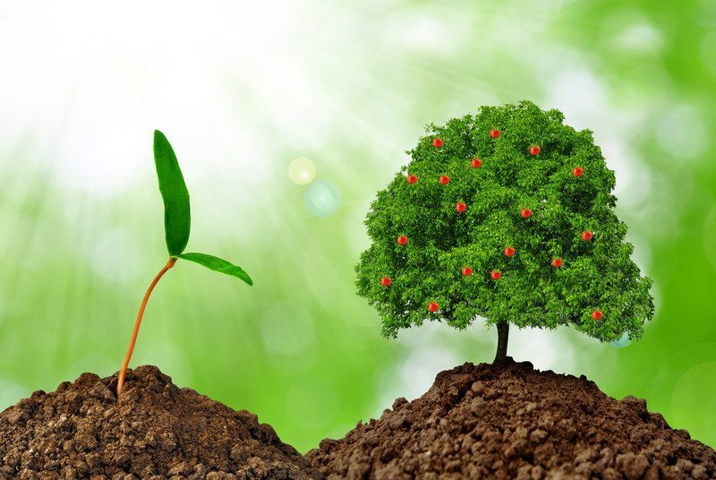 growth canstockphoto12539499